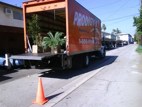Truck Carrying Plants