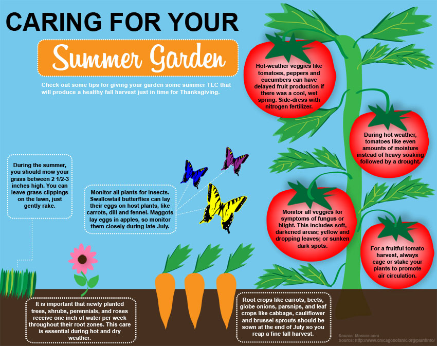Grow a Mid-Summer Garden and Save on Grocery Bill